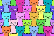 colour-cats
